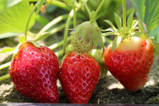 frutta-biologica-verona